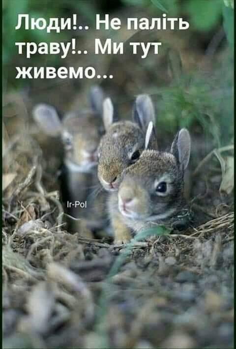 FB_IMG_1614921845603.jpg